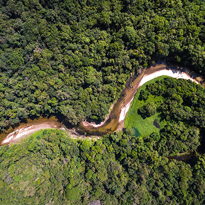 Amazonia Day: important date to reflect on the importance of protecting the rainforest